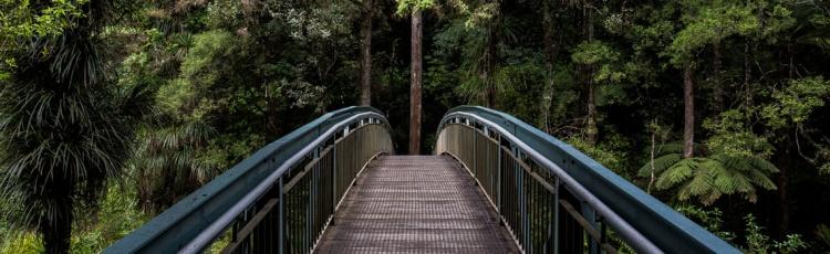 Puente en medio del bosque